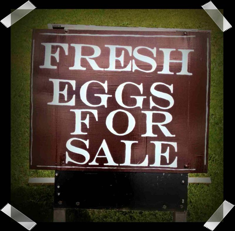 We have fresh farm eggs for sale